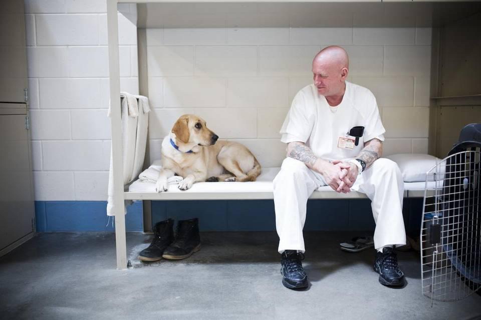 """alt=""""presos entrenan perros detectores coffee Prison"""""""