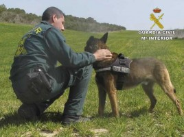 "alt=""perro detector venenos Guardia Civil"""