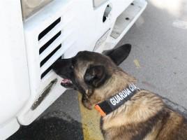 """alt=""""perro detecta restos ciclista atropellado por camión"""""""