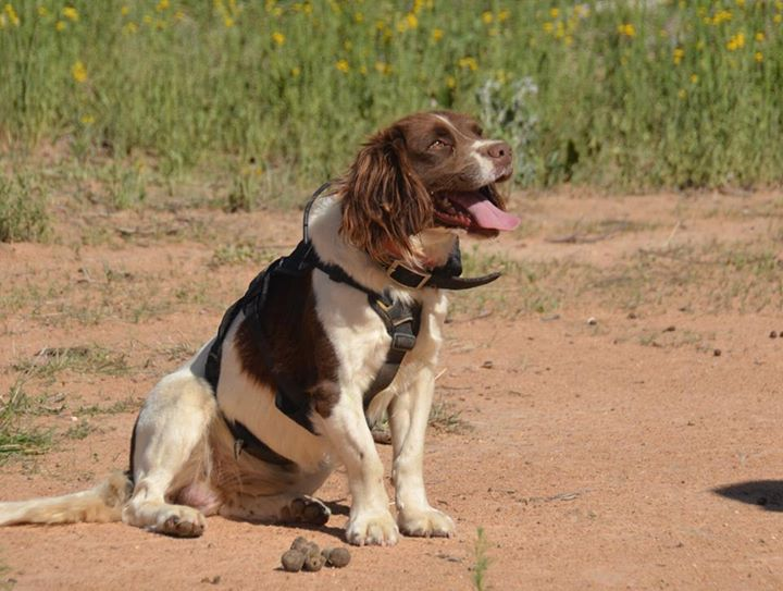 "alt=""perro detector heces animales"""
