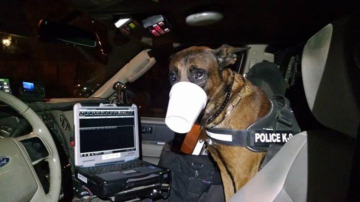 """alt=""""perro policía pillado in fraganti robando un helado"""""""