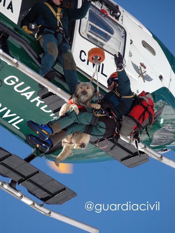 """alt=""""perro entrenado Guardia Civil ejercicio en helicóptero"""""""