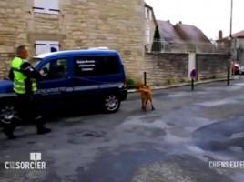 "alt=""perros de la gendarmeria francesa programa"""