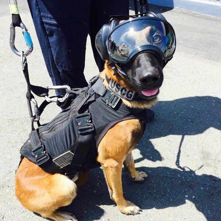 perro-arnes-heli-1