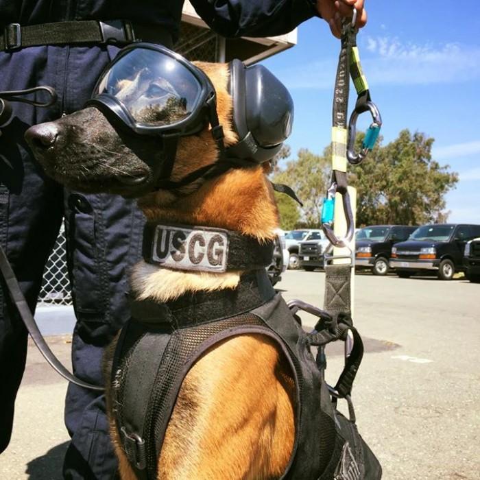"alt=""perro rescate arnés helicóptero"""
