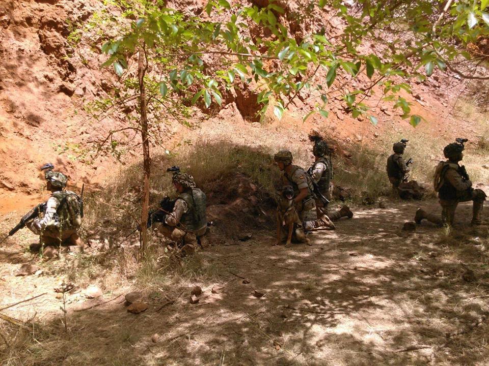 "alt=""UCAS perros combate en cuevas"""