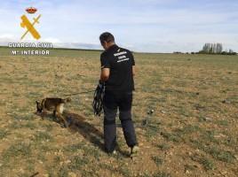 """alt=""""perros detectores explosión pirotecnia Zaragoza"""""""