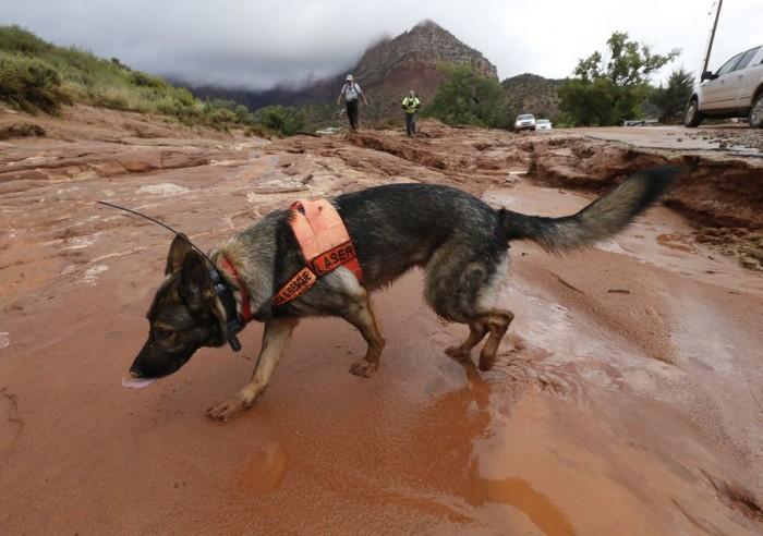 """alt=""""perros rescate riada Utah"""""""