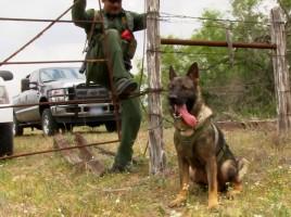 """alt=""""perros detectores en la frontera EEUU y México"""""""