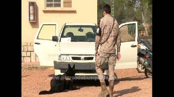 """alt=""""equipos cinologicos del Ejército de Tierra en Betera"""""""