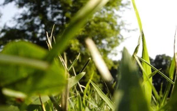 """alt=""""olor muerte como hierba recién cortada"""""""