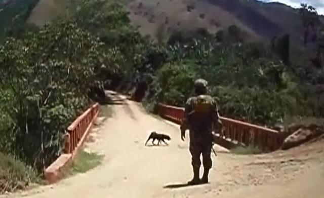 """alt=""""perro detecta explosivo Farc"""""""