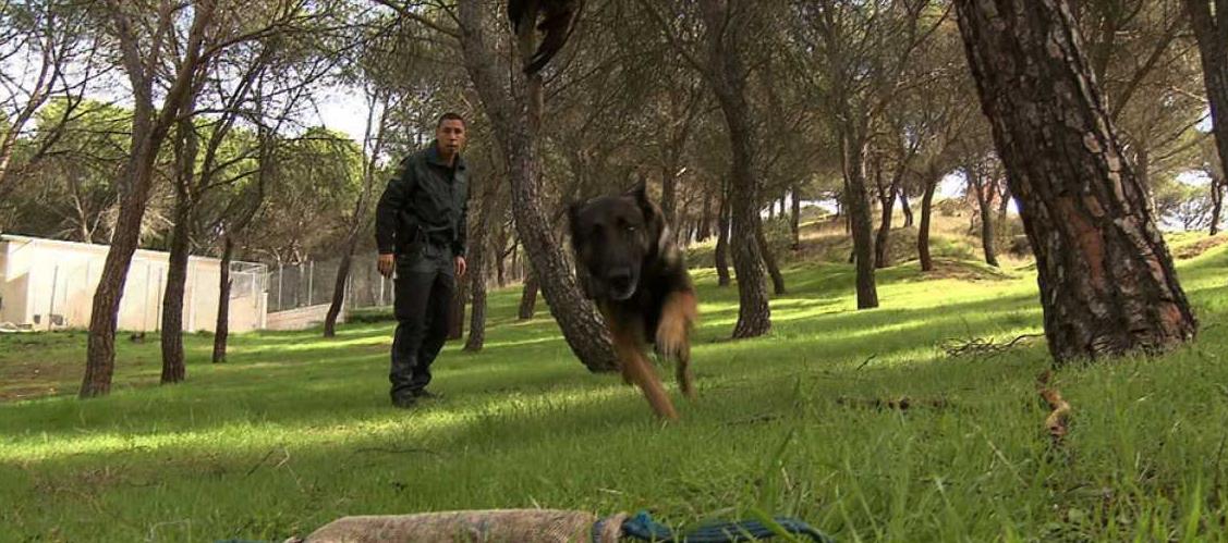 """alt=""""perros detectores venenos Seprona"""""""