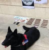 """alt=""""perro detector localiza maleta con droga en bus Alicante"""""""