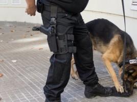 """alt=""""perro detector policia Girona descubre droga"""""""