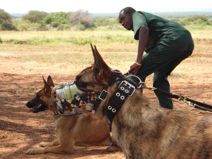 """alt=""""perros para proteger rinocerontes y elefantes""""-rinos"""