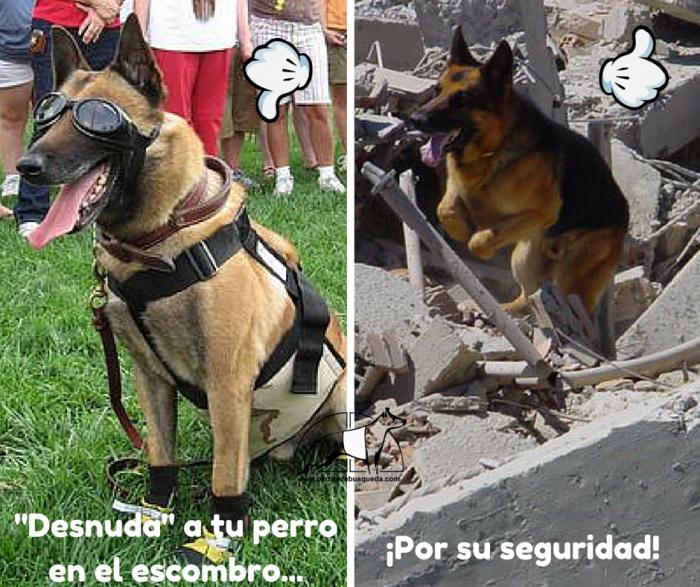 """alt=""""perros de rescate en escombro desnudos"""""""