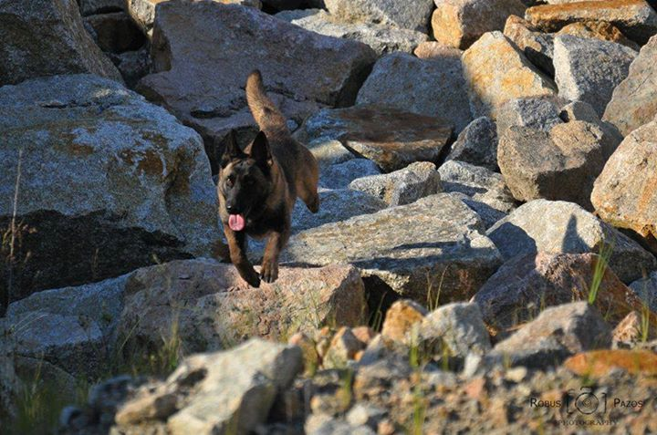 Encuentro internacional para perros de rescate