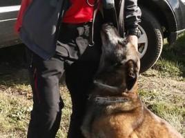 "alt=""perro rescate Ertzaintza encuentra vivo a anciano"""