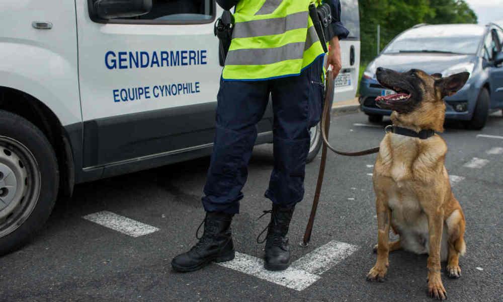 """alt=""""perro muerto en asalto a Saint-Denis"""