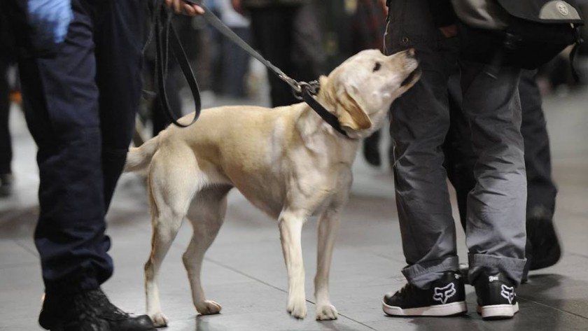 "alt=""perros de drogas privados prohibidos en eventos Australia"""