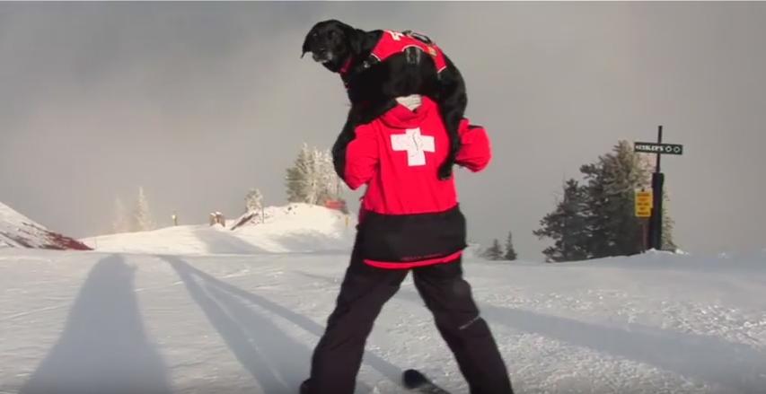 """alt=""""perros avalancha Aspen"""""""