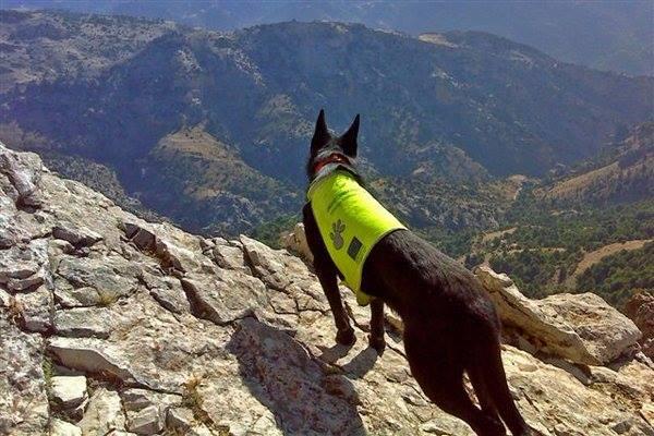 "alt=""jornadas WWF perros detectores veneno"""