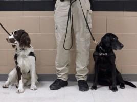 Perro entrenado probará comida de El Chapo para evitar veneno