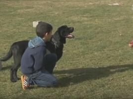 Perros jubilados Guardia Civil