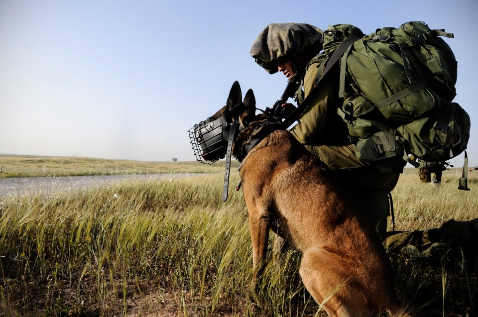 Perros IDF Oketz encuentran pistolero heces
