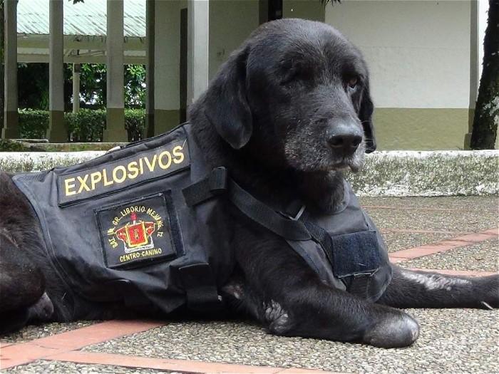 Homenaje Kaiser perro explosivos