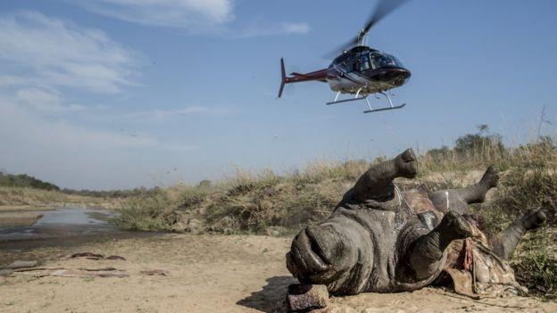perro protege rinocerontes medalla PDSA