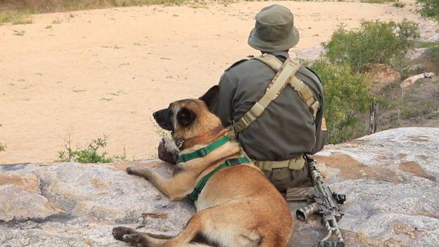 Killer, perro protege rinocerontes medalla PDSA