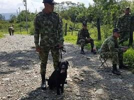 Muere perro ejército al pisar una mina