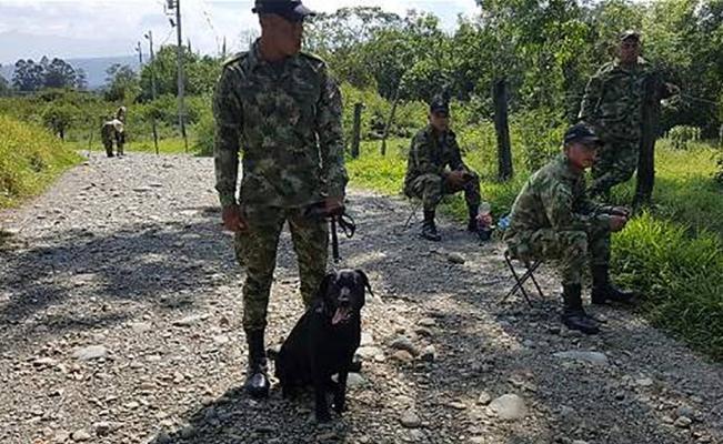 Muere un perro del ejército al pisar una mina