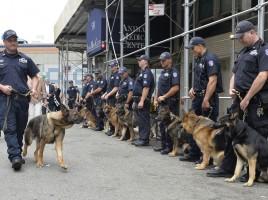 perros de trabajo oficiales del estado Nueva York
