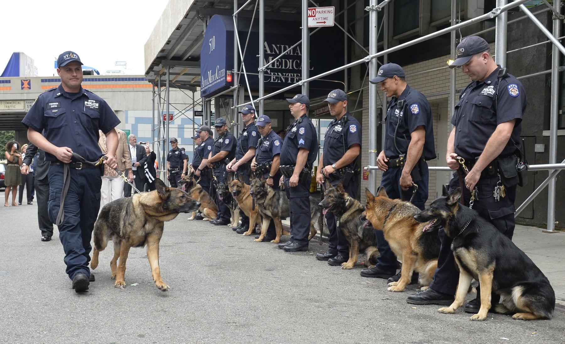 perros oficiales del estado Nueva York