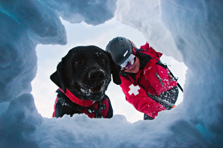 """alt=""""perro de rescate en avalancha localiza"""""""