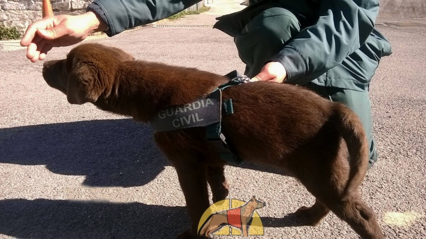 Toby cachorro Guardia Civil