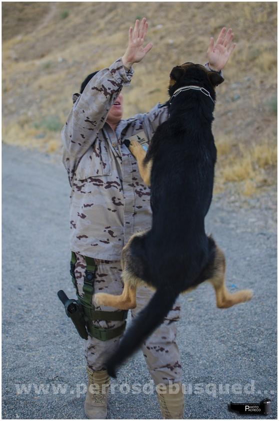 María y Tancho Perro militar explosivos