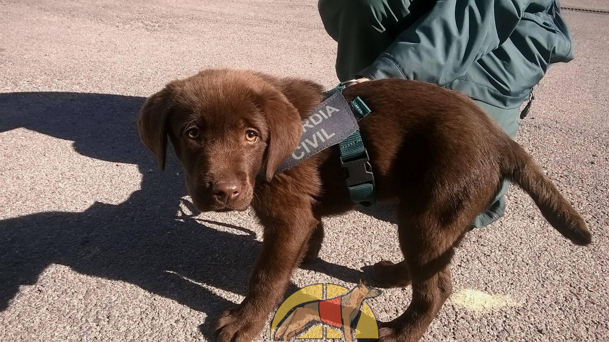 Toby cachorro Guardia Civil