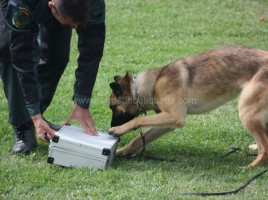 Perro detector de drogas Guardia Civil