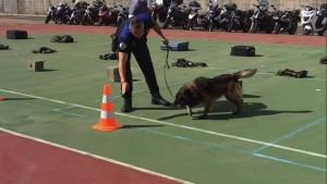Campeonato de perros detectores