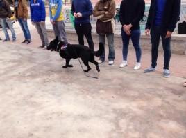 Campaña prevención drogas instituto unidad canina