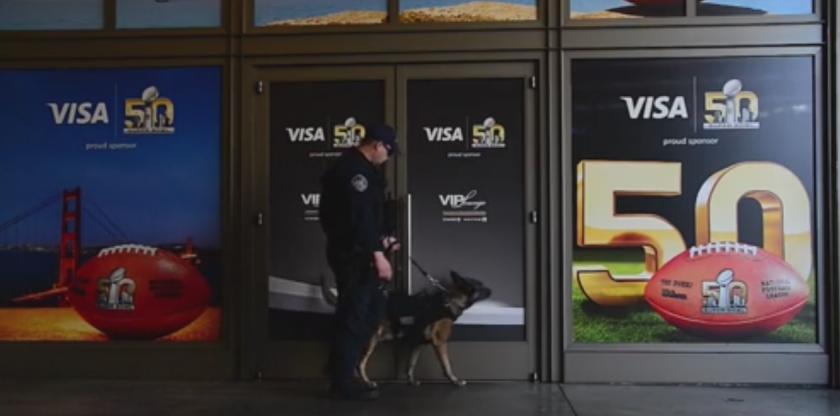 Super Bowl perros detectores