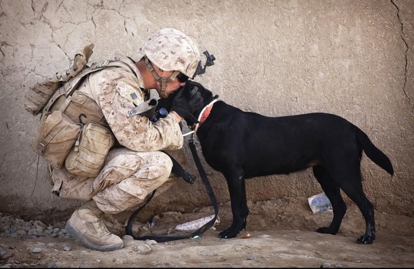 K2 perros militares retirados adopciones