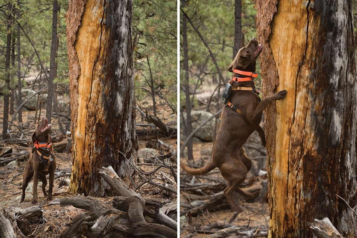 Perros detectores de Colonias de murciélagos