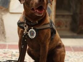 Milka, una perra policía