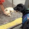 perros detectores de explosivos desde el 11-S