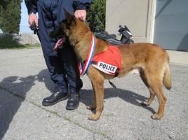 Choc, perro condecorado con medalla